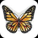 Candleware-CDB301-Monarch Butterfly - Monarch Butterfly
