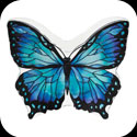 Candleware-CDB305-Blue/Black Butterfly - Blue/Black Butterfly