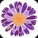 Metal Magnet-MM5002-Purple Gerbera Daisy - Purple Gerbera Daisy