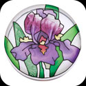 Paperweight/Coaster-PWT1006-Purple Irises - Purple Irises